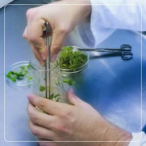 صنایع خشکبار و گیاهان دارویی